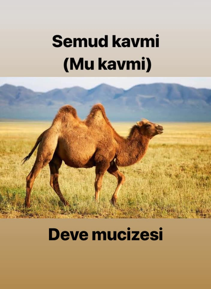 Hz Salih'in devesi mi bulundu?