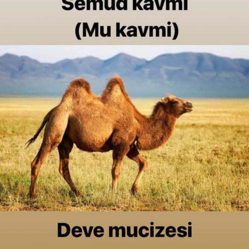 Hz Salih'in devesi mi bulundu?