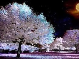 Hz Muhammed - Altı şey güzeldir. Onların altı şahısta bulunması daha güzeldir: