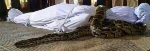 Zalim padişahı kabirde yutan yılan