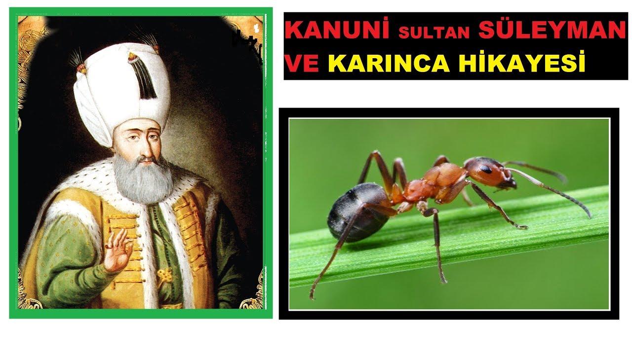 Kanuni Sultan Süleyman ''Günah var mı karıncayı kırınca?''