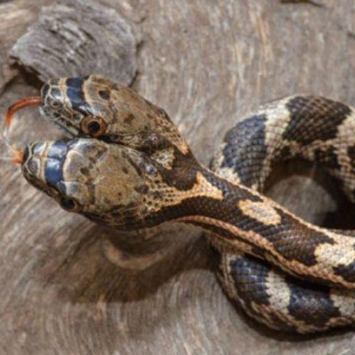 Kafiri kabirde kaç tane yılan sokacak?