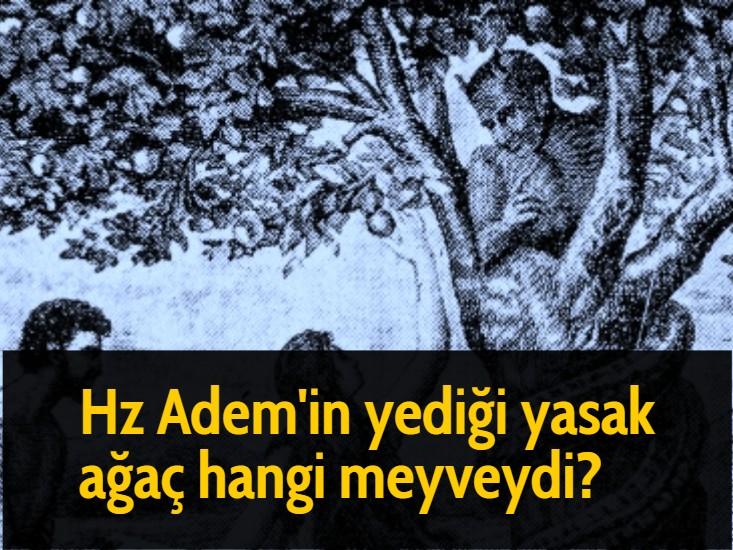 Hz Adem'in yediği yasak ağaç hangi meyveydi?