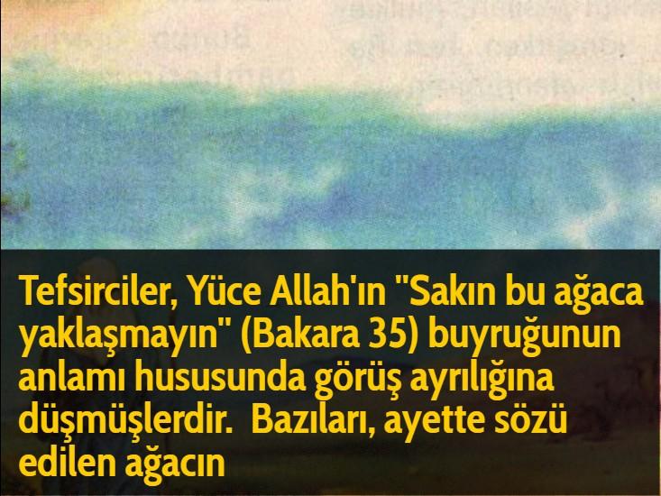 Tefsirciler, Yüce Allah'ın ''Sakın bu ağaca yaklaşmayın'' (Bakara 35) buyruğunun anlamı hususunda görüş ayrılığına düşmüşlerdir.  Bazıları, ayette sözü edilen ağacın